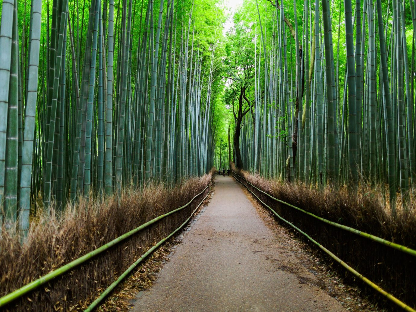 Trip Ideas habitat green Nature tree natural environment atmospheric phenomenon Forest grass plant woodland sunlight leaf morning woody plant field rural area bamboo Jungle autumn grass family