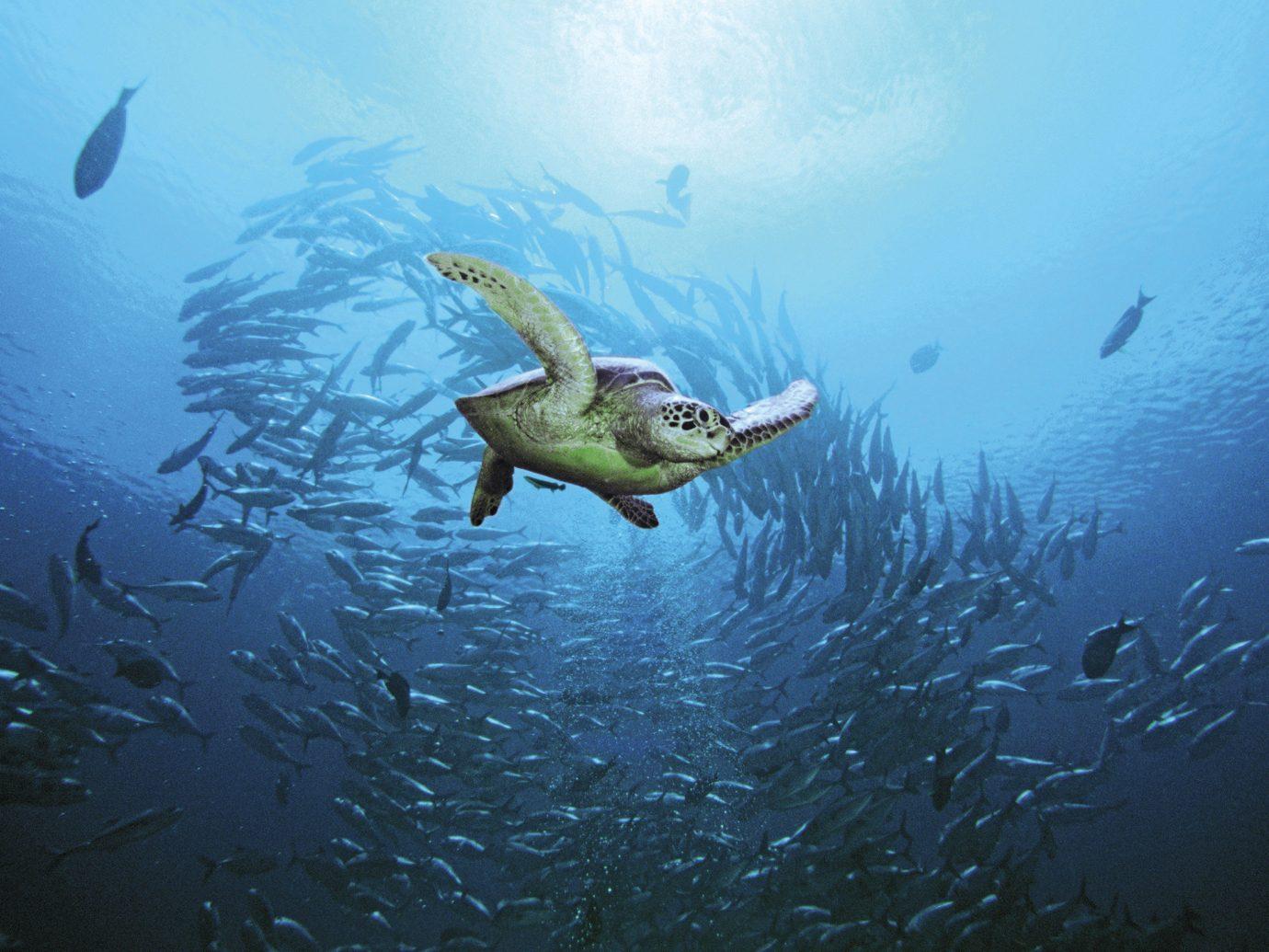 Trip Ideas water marine biology underwater fish flock biology Ocean Sea Lake reef diving dark swimming