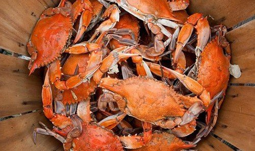 Trip Ideas arthropod animal invertebrate floor food dungeness crab indoor crustacean crab decapoda Seafood american lobster homarus animal source foods crab boil wooden fish seafood boil soft shell crab lobster shellfish king crab wood meat meal dirty