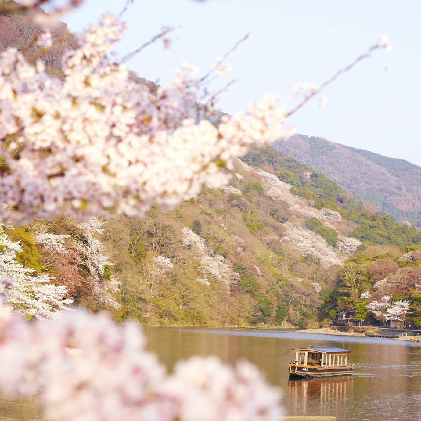Beauty Health + Wellness Japan Kyoto San Francisco Travel Tips flower plant blossom cherry blossom spring flora tree sky