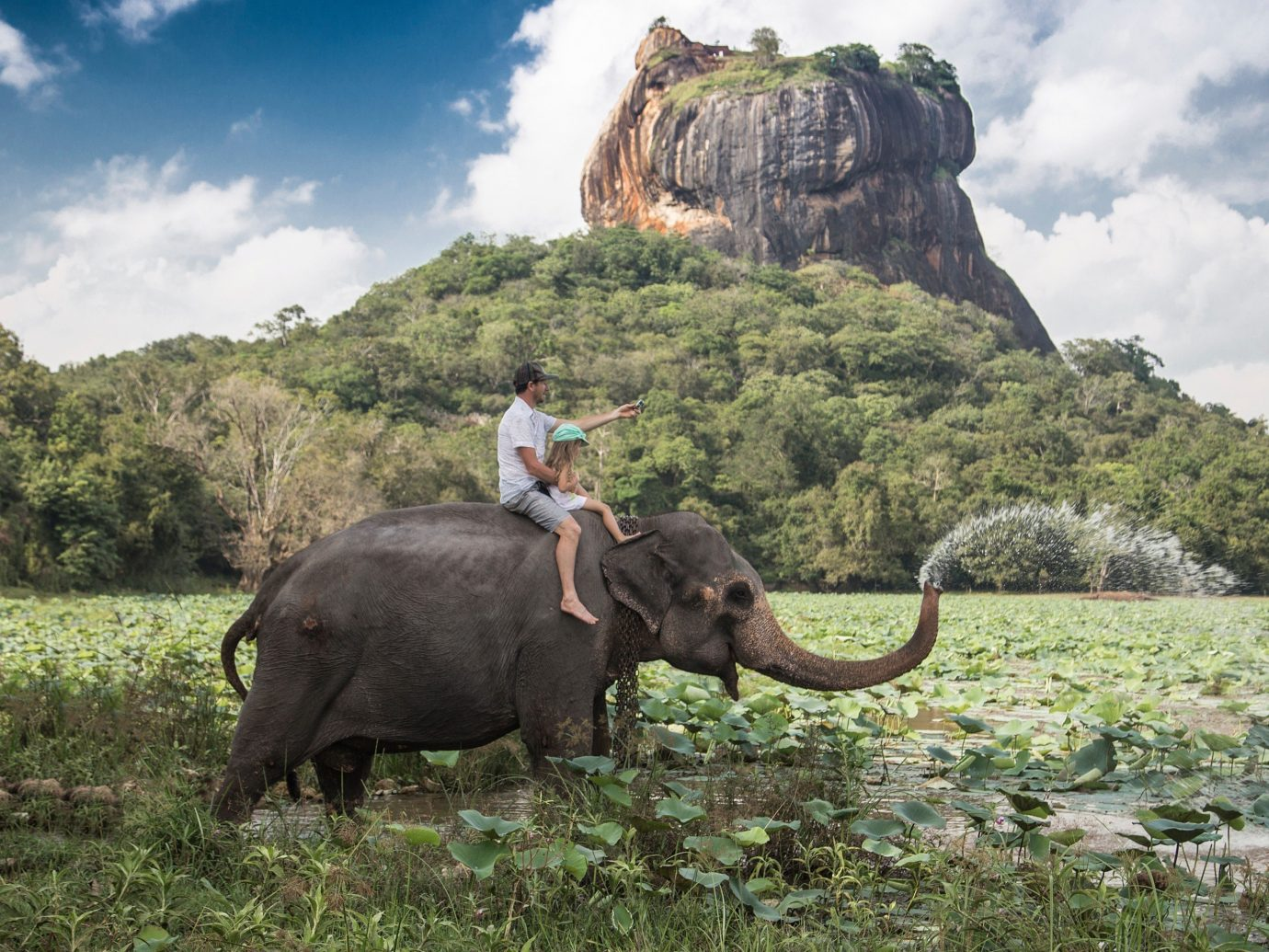 Trip Ideas outdoor grass sky indian elephant elephant animal mammal elephants and mammoths field fauna Wildlife Adventure Safari mahout savanna Jungle cattle like mammal bovine