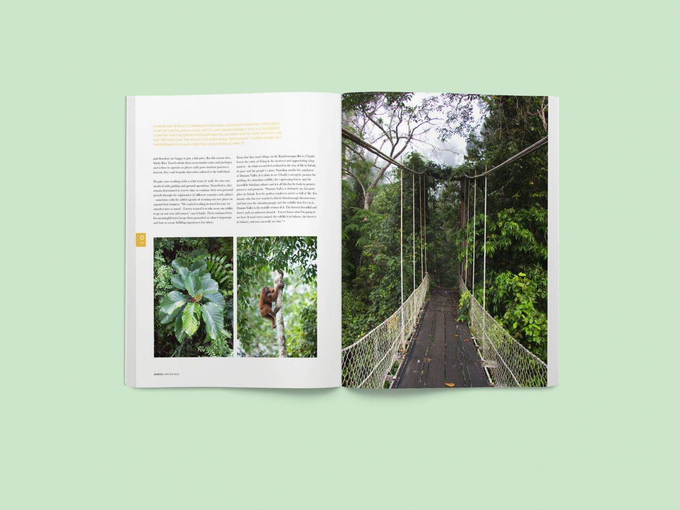 Arts + Culture flora botany wall window Design interior design presentation pattern