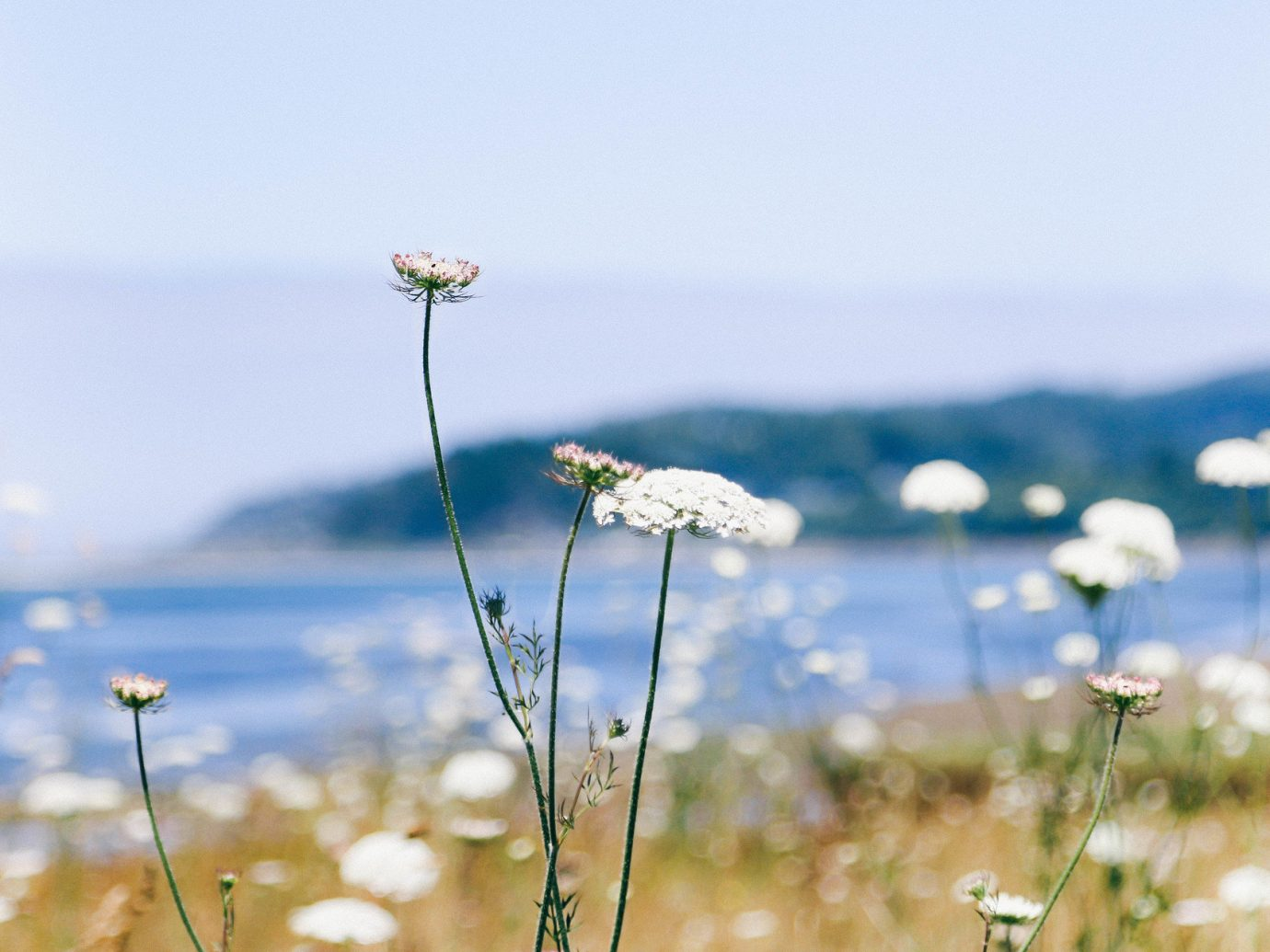 Jetsetter Guides Road Trips sky Nature flower flora water plant photography grassland grass meadow morning field land plant petal sunlight blossom wildflower flowering plant plant stem macro photography