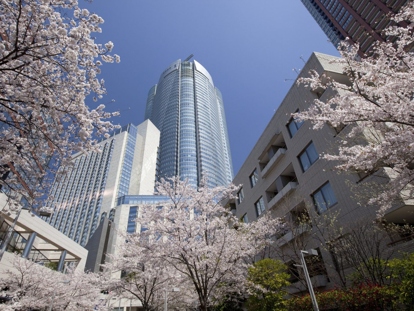 Trip Ideas tree outdoor sky flower building plant cherry blossom urban area City Winter spring season Downtown blossom skyscraper cityscape snow tower