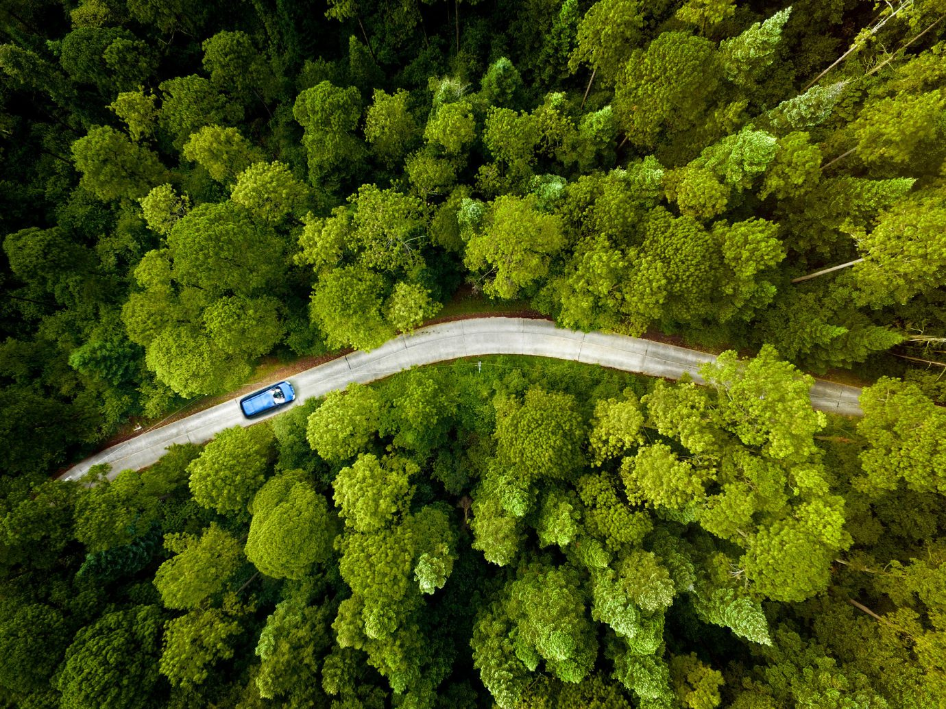 Road Trips Trip Ideas tree green vegetation ecosystem plant botany leaf land plant Forest moss aerial photography woody plant soil flower rainforest shrub non vascular land plant