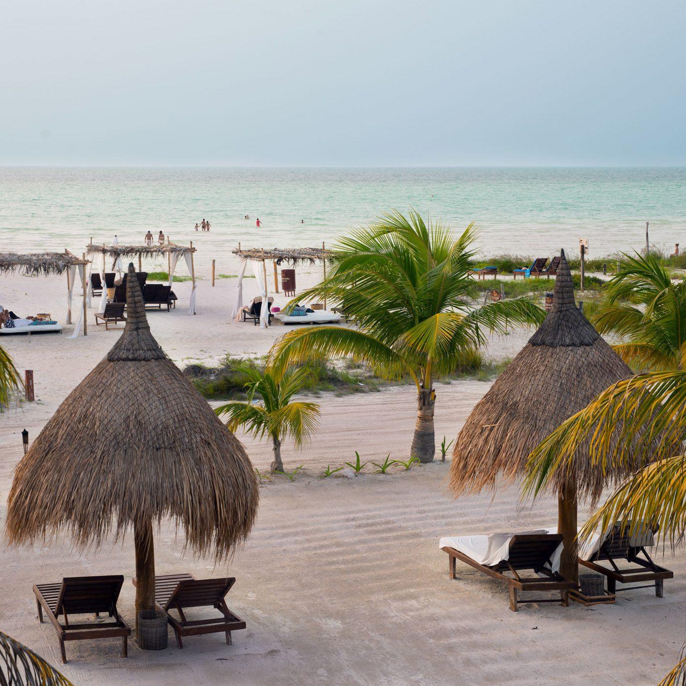 Beach Beachfront water sky tree plant palm Ocean Resort Sea shore arecales palm family tropics caribbean Coast travel Pool sandy lined swimming shade