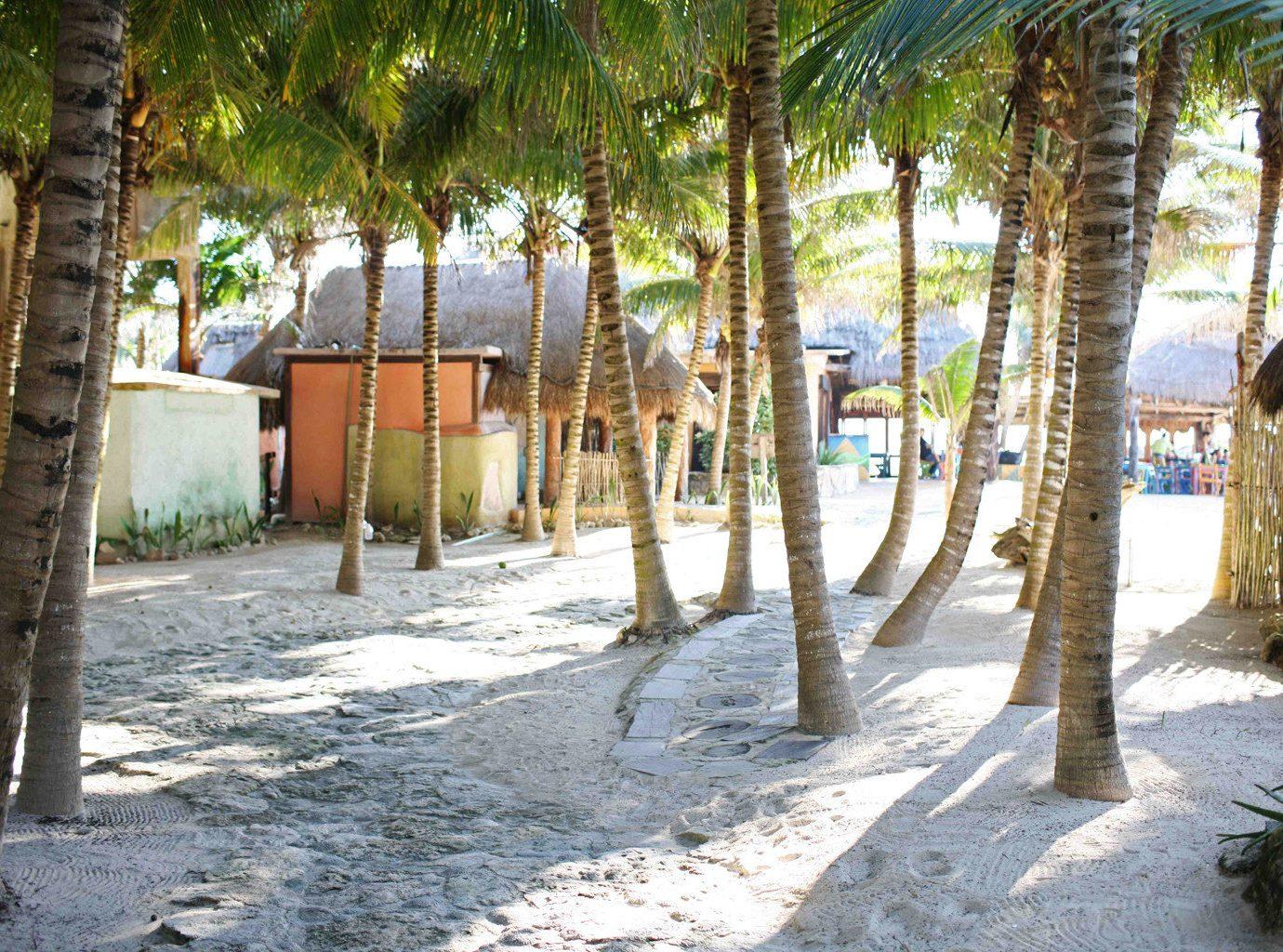 Beach Beachfront Grounds Island tree ground property plant Resort Village home shade