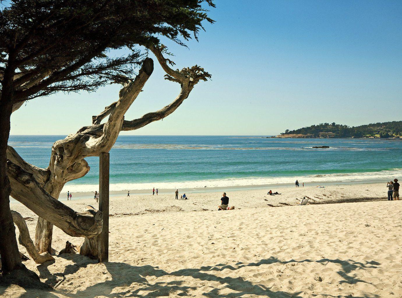 Beach Ocean sky tree water shore Sea Coast arecales sand plant sunny day shade sandy