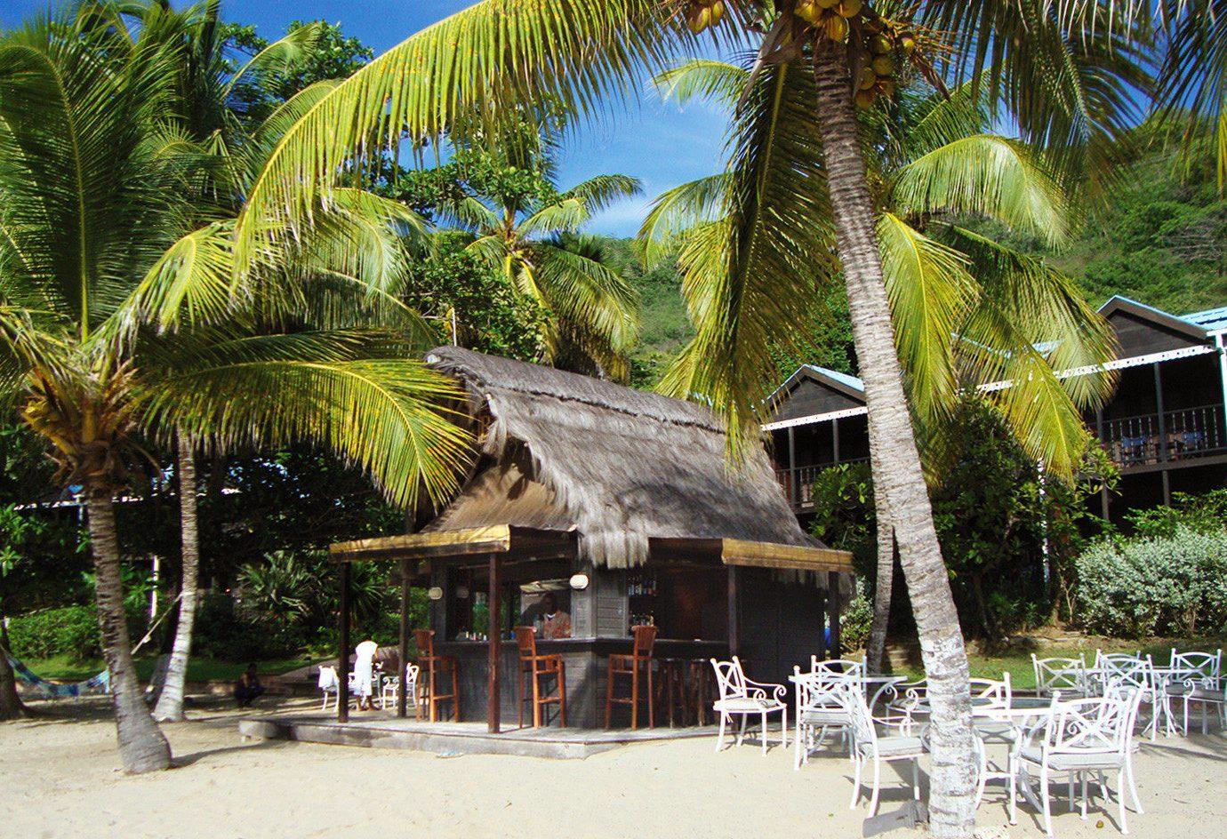 tree Resort Beach arecales caribbean palm family palm restaurant tropics plant lined shade