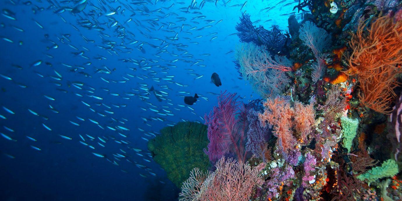 Trip Ideas habitat reef coral reef marine biology coral underwater coral reef fish natural environment biology Ocean Sea Scuba Diving diving water sport plant underwater diving colored