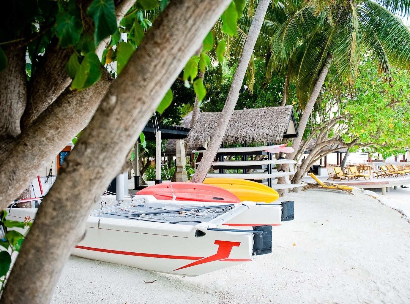 tree ground vehicle Resort Boat