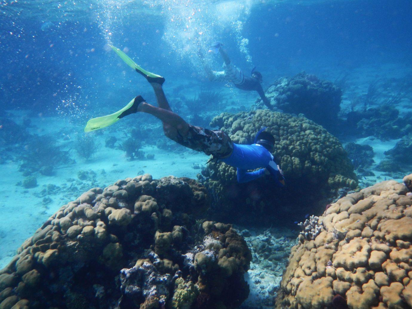 Trip Ideas outdoor rock coral reef reef marine biology Ocean biology underwater Sea Scuba Diving underwater diving outdoor recreation Sport diving coral reef fish coral Nature recreation sports swimming blue ocean floor