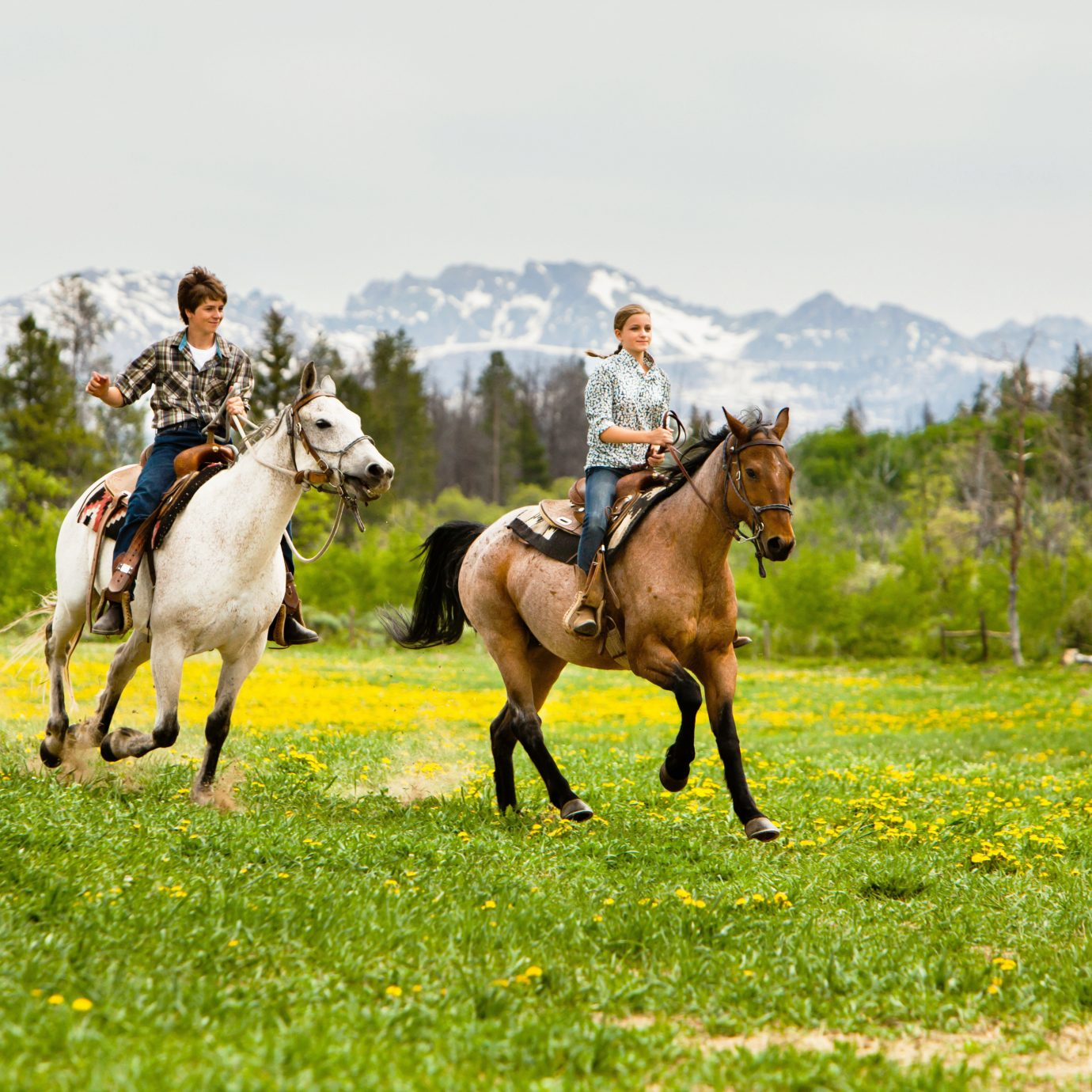 Country Mountains Outdoor Activities Ranch Rustic grass sky field endurance riding horse pasture trail riding equestrianism grassland mare eventing mustang horse equestrian sport animal sports horse like mammal english riding grazing meadow mammal sports stallion herd grassy