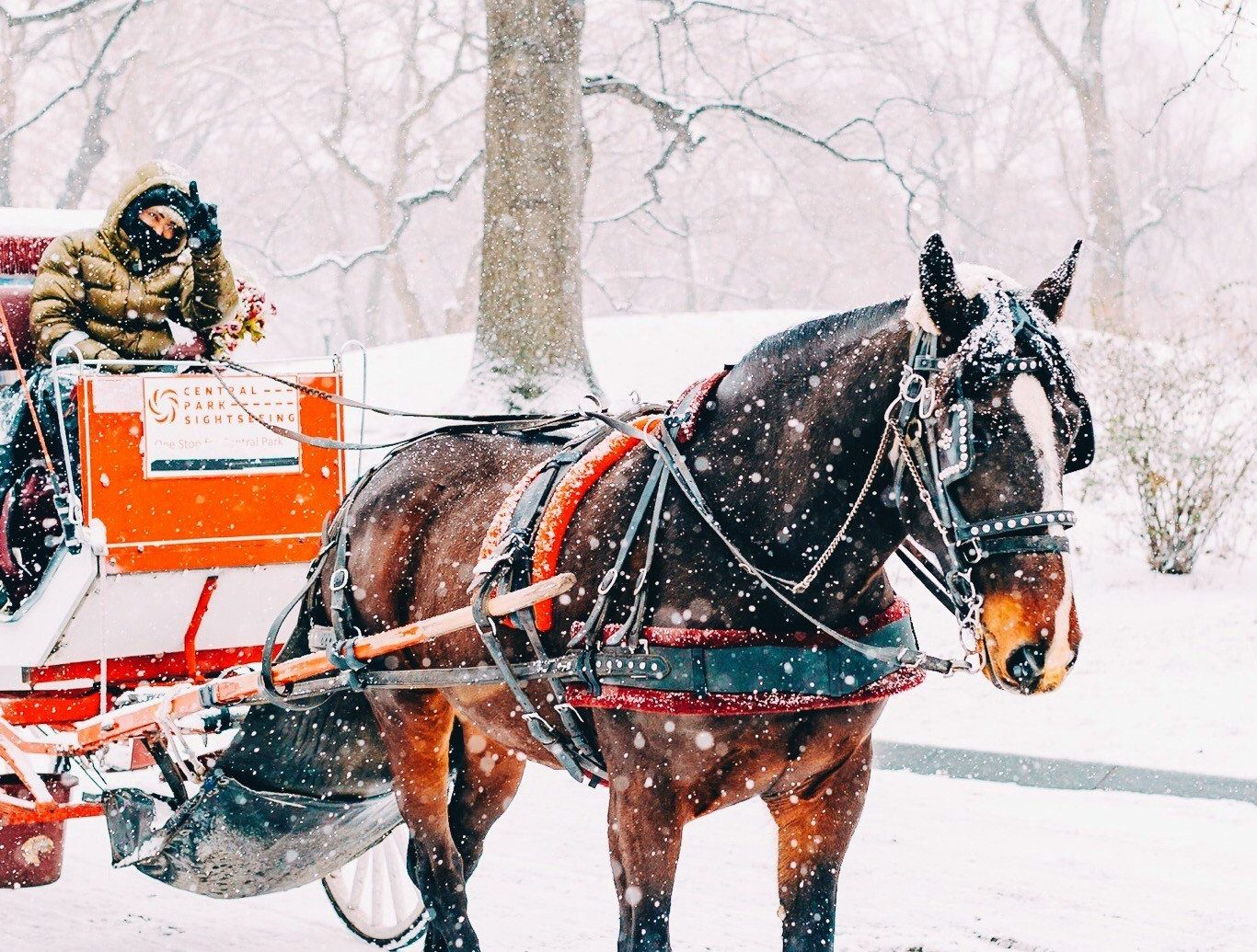 Boutique Hotels Romance Trip Ideas tree outdoor snow horse horse harness pulling transport carriage horse and buggy land vehicle vehicle Winter coachman drawn pack animal season sled pulled cart