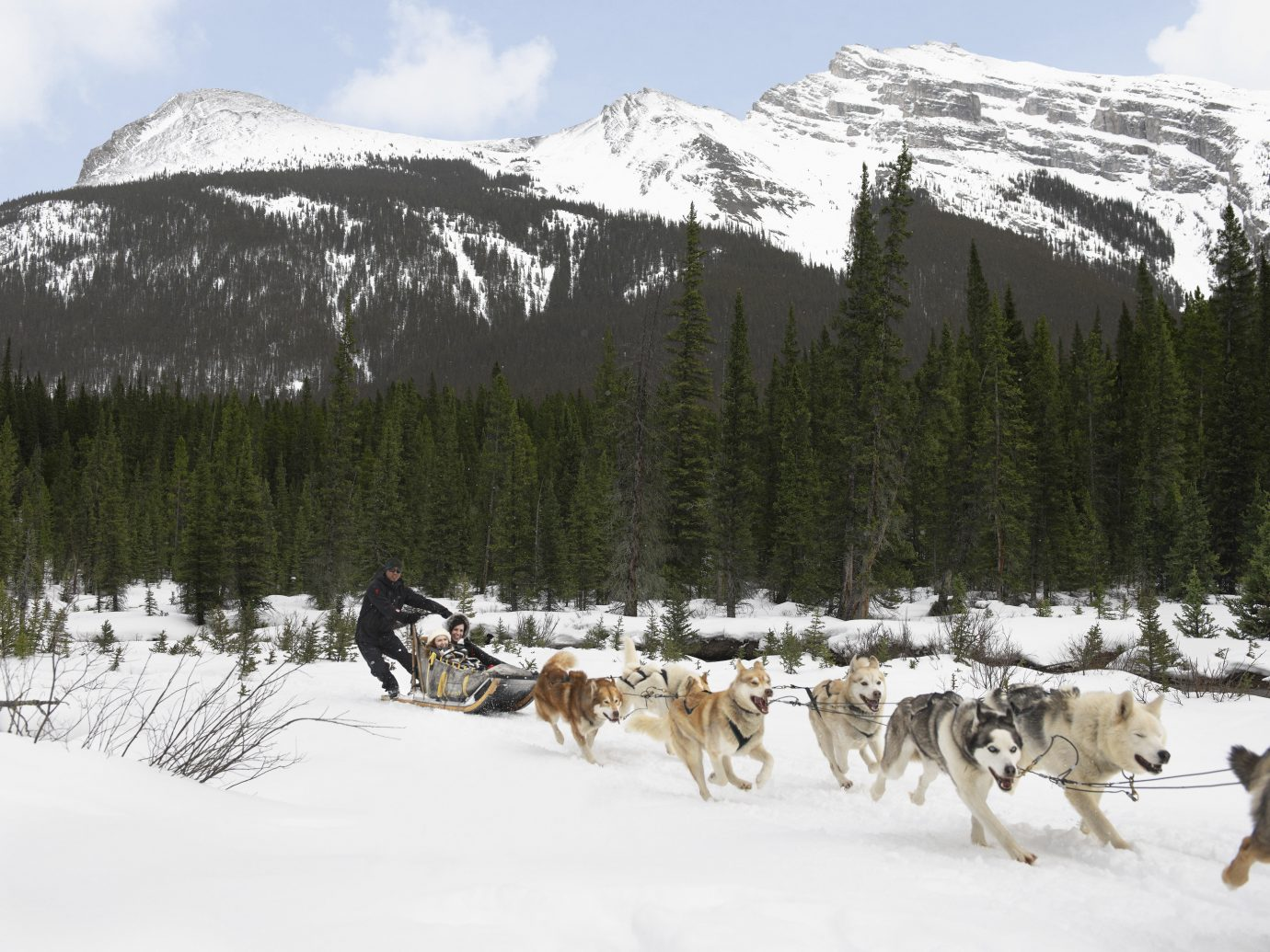 Alberta Canada Road Trips snow outdoor transport sky sled cow mountain vehicle dog sled land vehicle group herd cattle Winter season mountain range