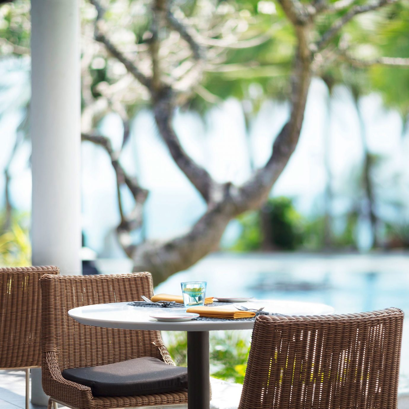 Dining Drink Eat Pool Resort tree chair park backyard flower dining table