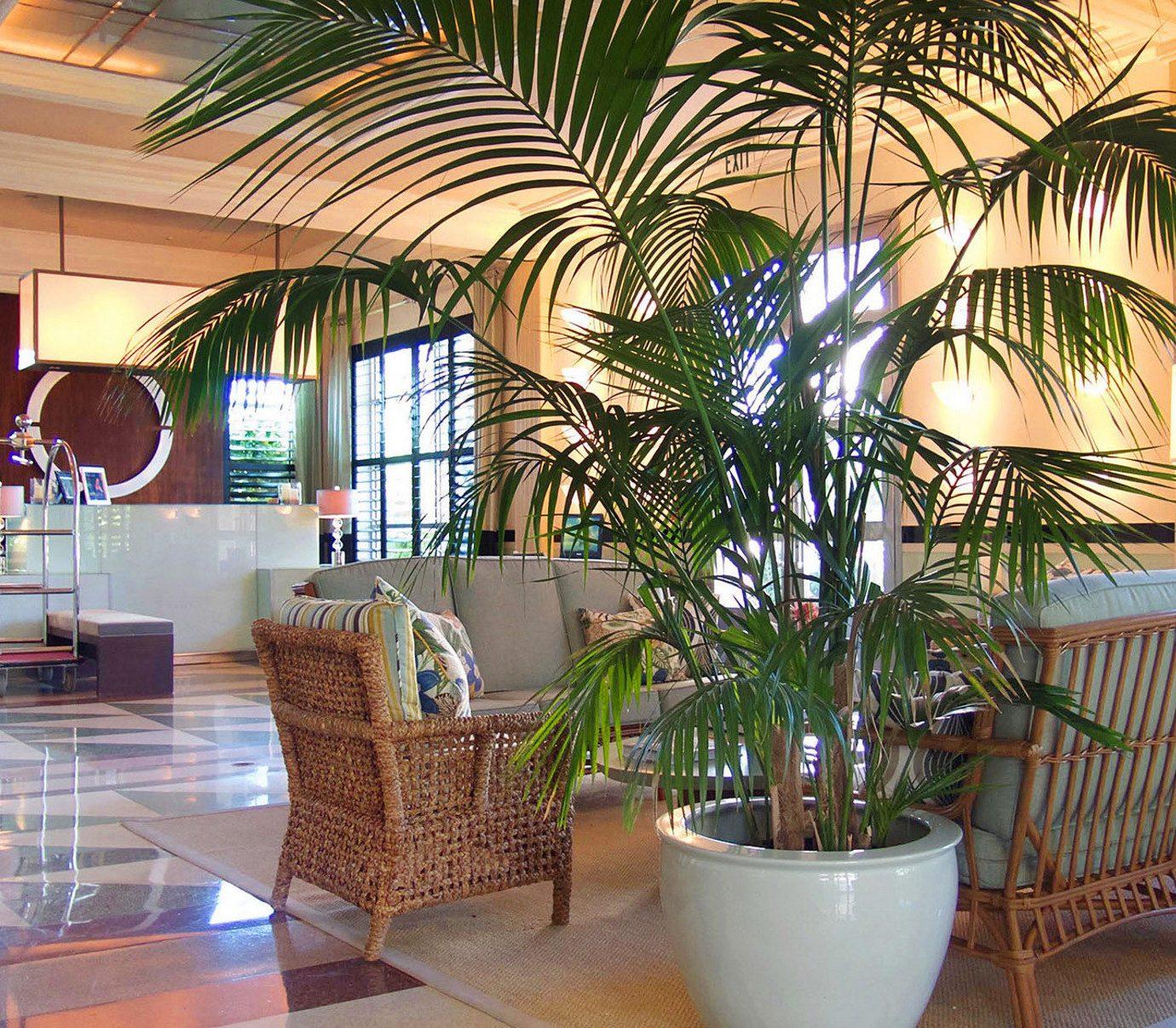 Lobby property condominium plant Resort home restaurant living room Villa Dining arecales tree