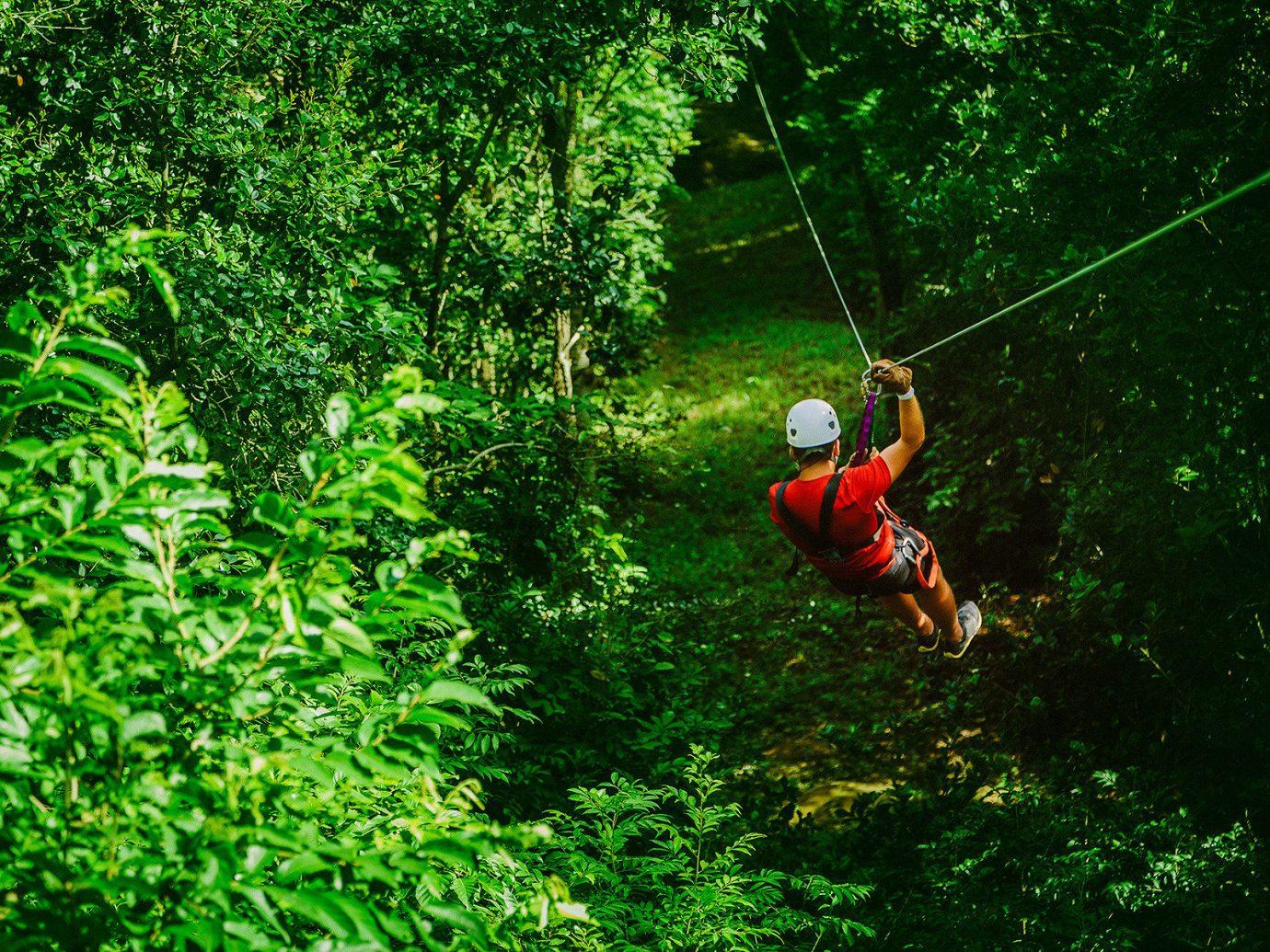 rain forest Trip Ideas zipline tree outdoor habitat green natural environment Forest rainforest Jungle Sport Adventure extreme sport screenshot woodland abseiling wooded