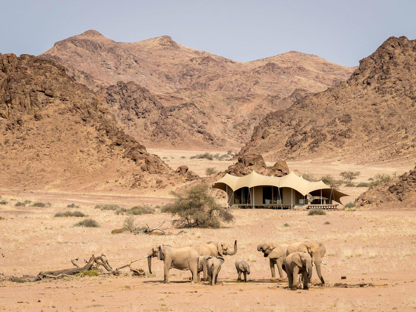 Hotels mountain outdoor sky ground Desert natural environment wilderness animal mammal wadi Camel steppe aeolian landform sahara savanna landscape herd valley dirt Wildlife plateau Safari Adventure arabian camel geology