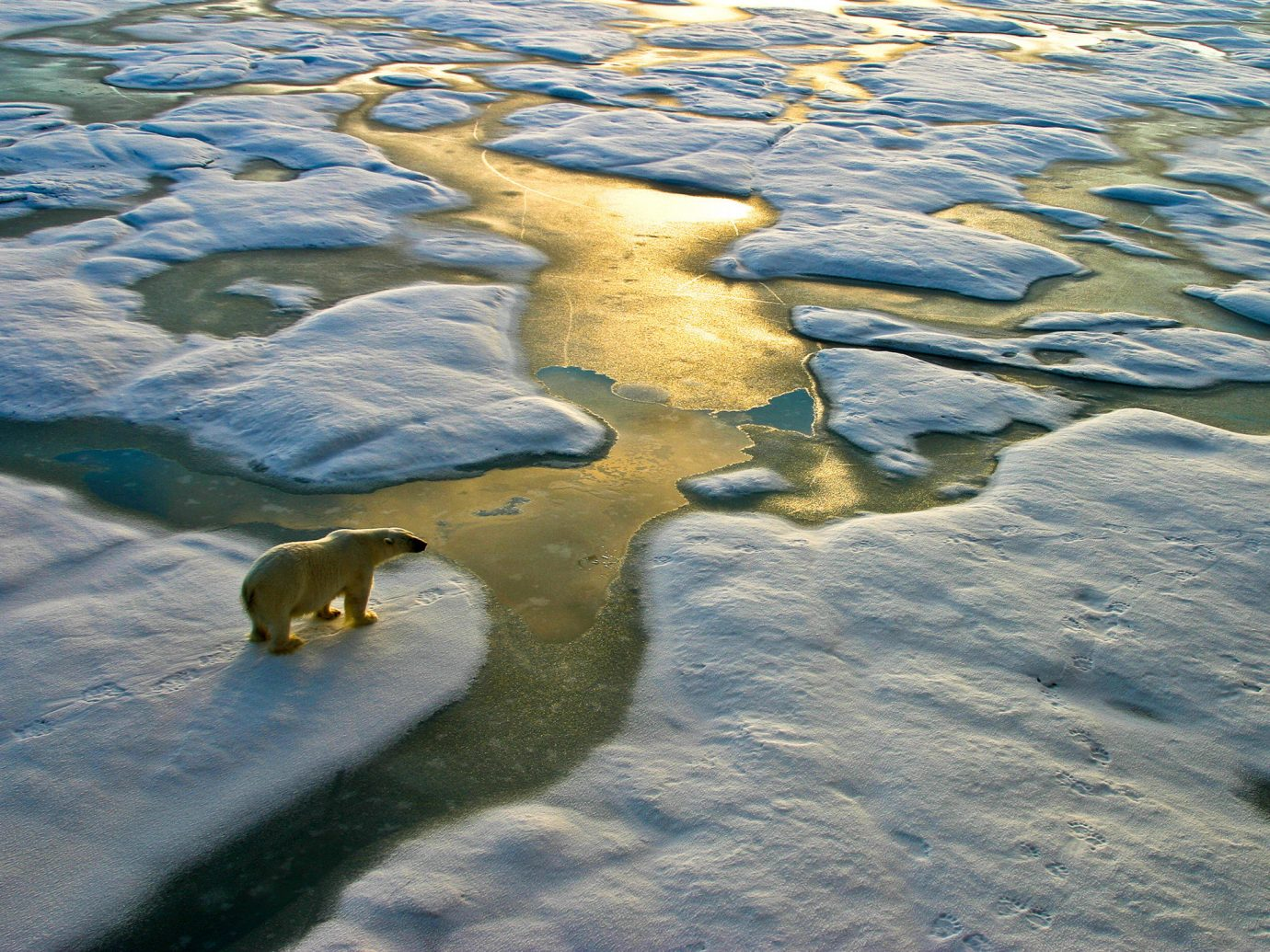 National Parks Trip Ideas water outdoor Nature reflection Sea arctic Wildlife Winter ice Ocean rock polar bear snow