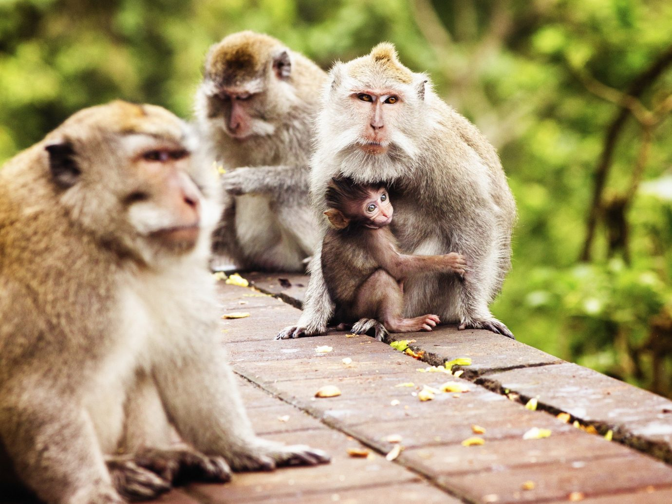 Travel Tips primate ground outdoor mammal monkey tree animal macaque vertebrate fauna old world monkey Wildlife