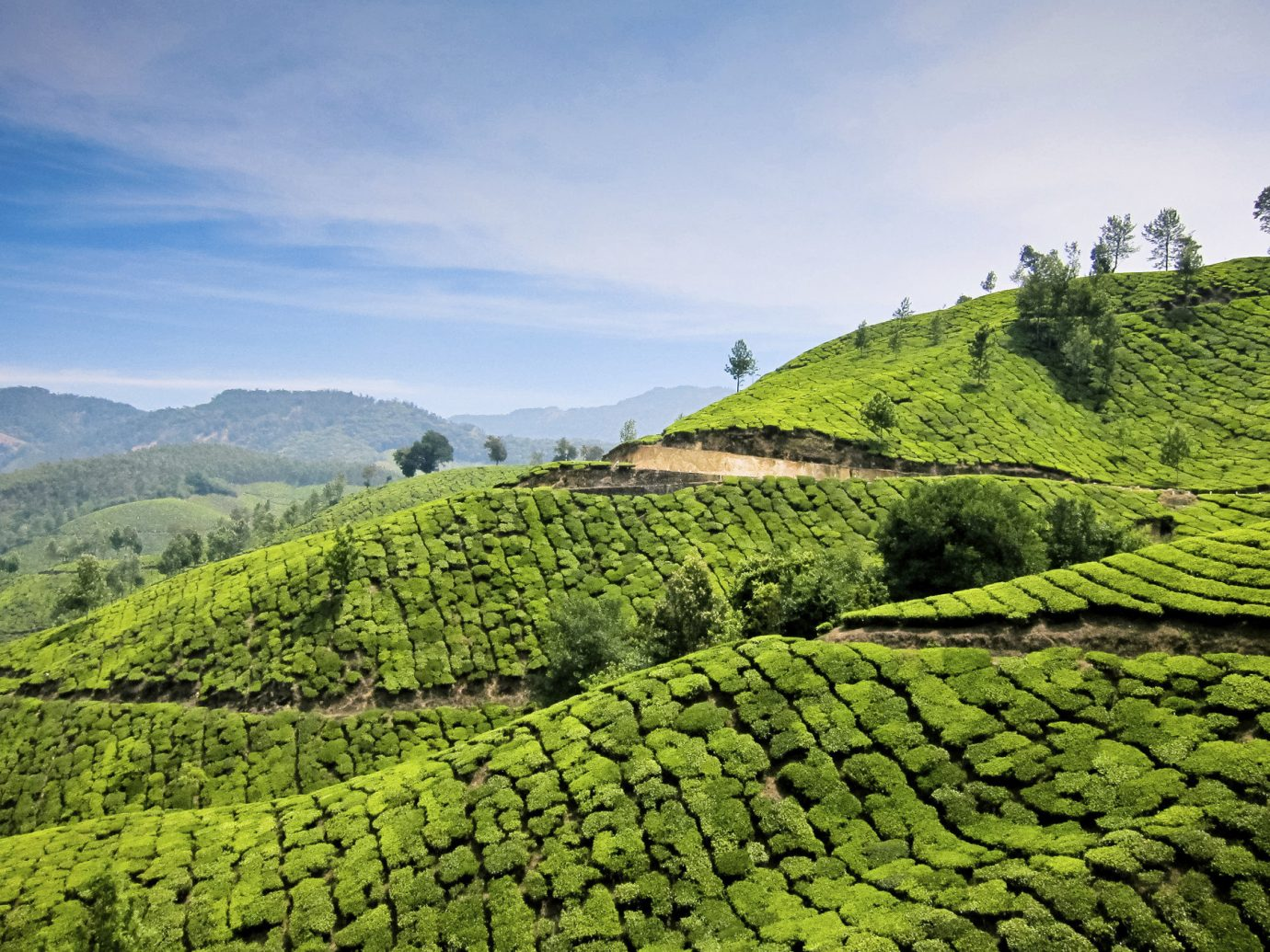 Offbeat Travel Tips outdoor sky green grass mountainous landforms Nature agriculture field tea mountain hill plantation valley rural area landscape mountain range leaf plateau Terrace flower beverage lush pasture grassy hillside day highland