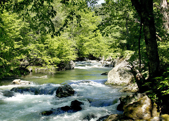 tree habitat water Nature creek River stream rapid wilderness watercourse natural environment ecosystem Forest water feature rock Waterfall woodland rainforest valley Jungle wooded