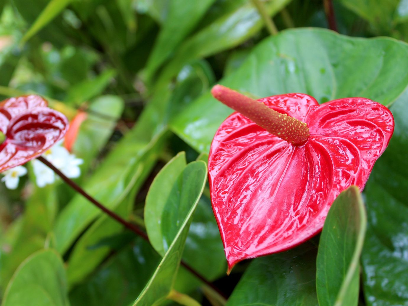 Trip Ideas tree flower plant outdoor flora Nature red green botany leaf macro photography land plant petal close up flowering plant wildflower