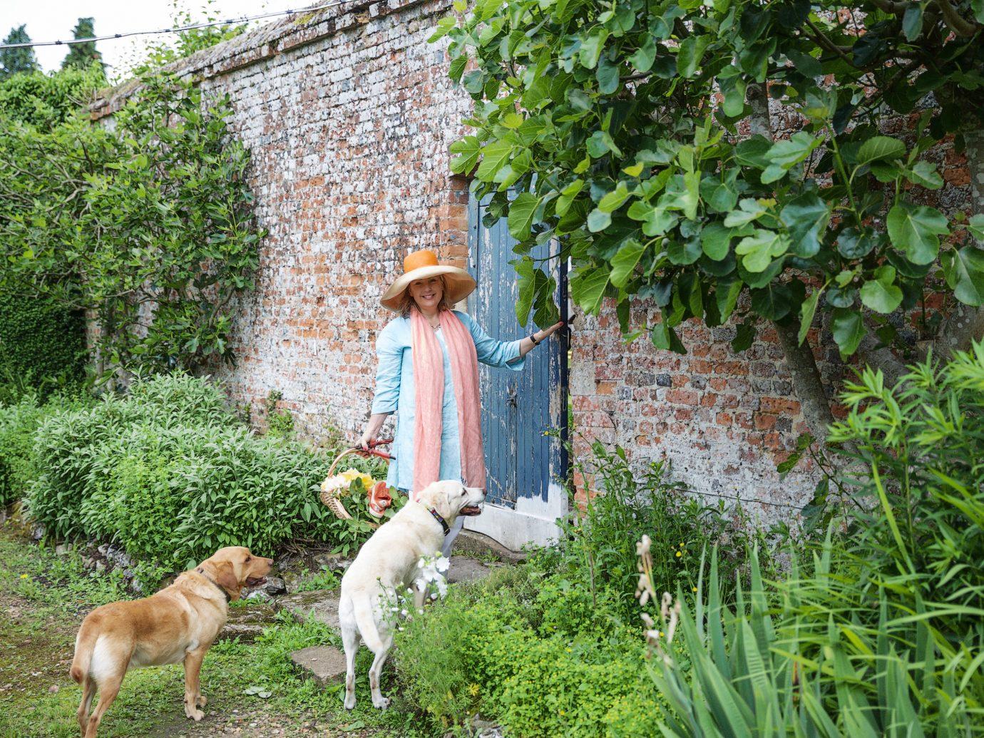Offbeat tree Dog outdoor agriculture rural area lawn Garden flower yard