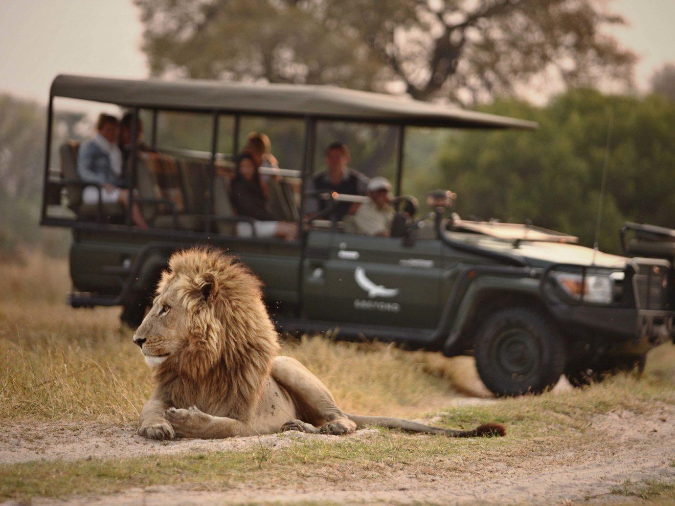 Hotels grass outdoor tree mammal Safari military vehicle off roading