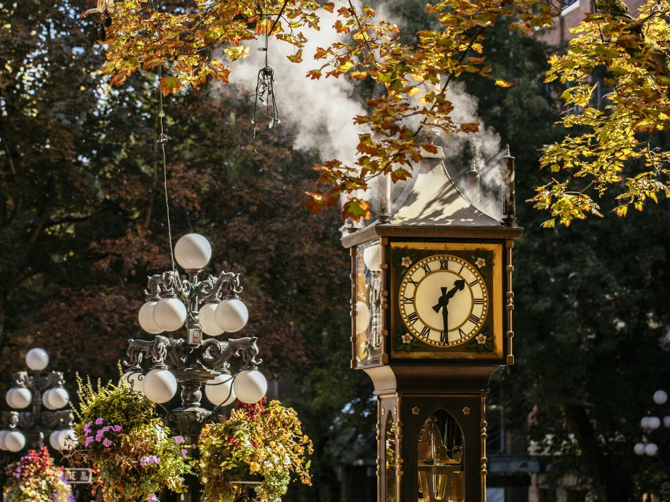 Trip Ideas clock tree outdoor season autumn leaf flower spring shrine surrounded