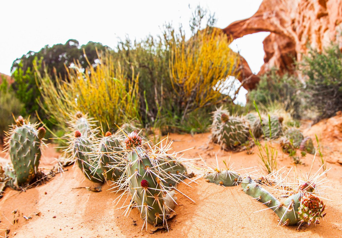 Family Travel National Parks Outdoors + Adventure Road Trips Trip Ideas cactus ground outdoor plant flora botany land plant flowering plant flower grass family prickly pear caryophyllales
