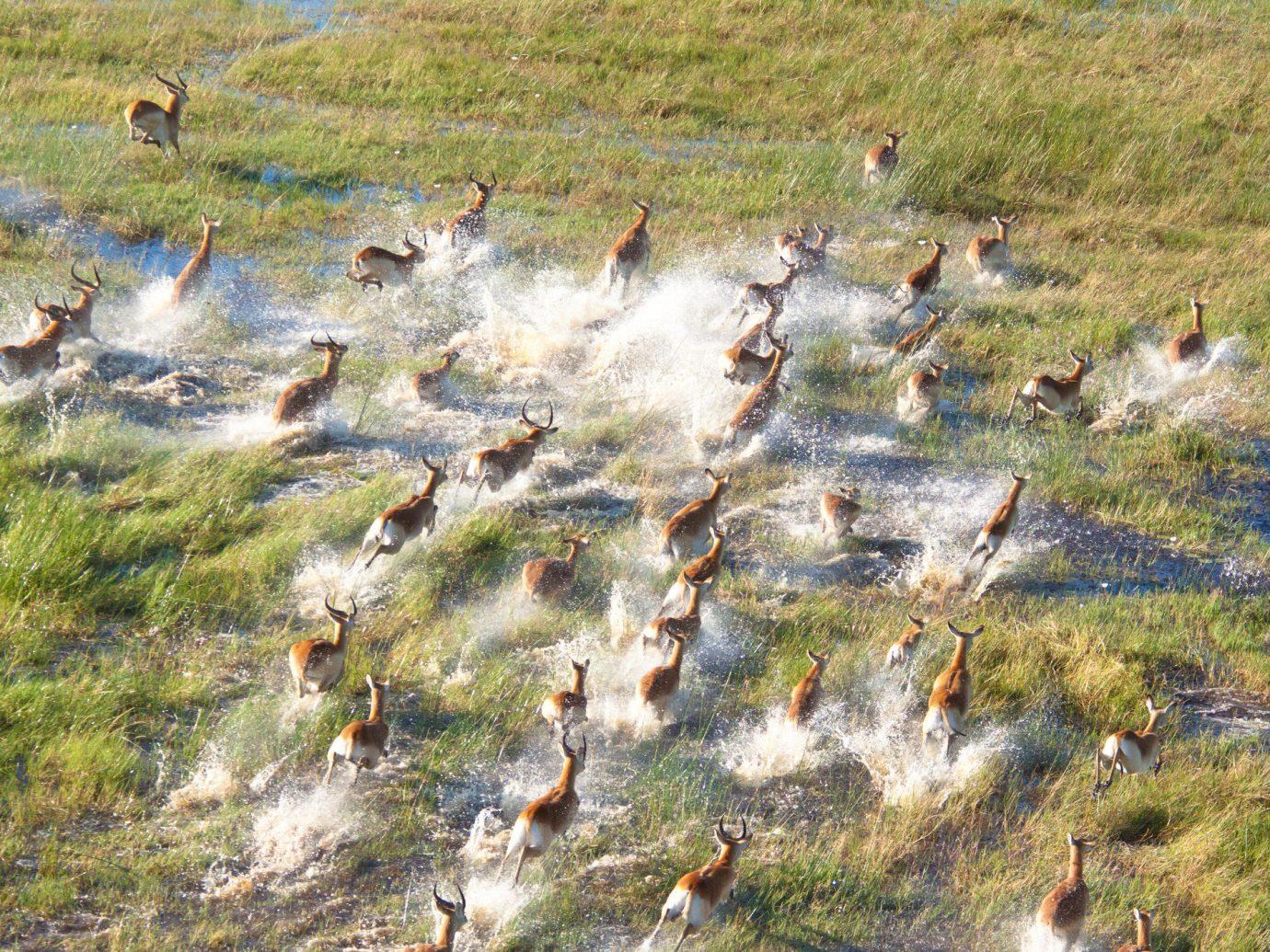Influencers + Tastemakers Travel Shop Trip Ideas grass outdoor Bird Wildlife wilderness fauna field wetland tundra flock duck group water bird swamp pond