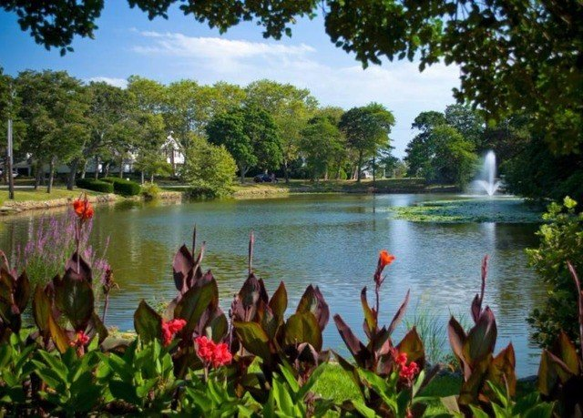 tree water bayou pond Lake Nature River flower fish pond Jungle botanical garden plant lined surrounded