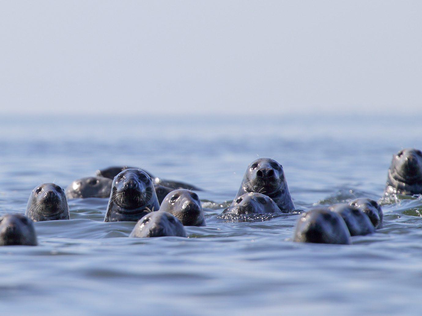 Offbeat Travel Tips animal water outdoor vertebrate mammal Sea seals Bird flightless bird Ocean Wildlife marine mammal arctic Coast harbor seal penguin wave ice sea otter