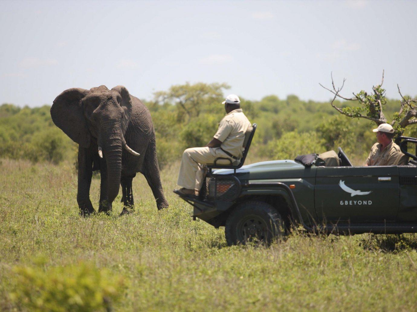 Outdoors + Adventure Travel Tips grass outdoor sky field Safari mammal Adventure grassy elephant military herd lush