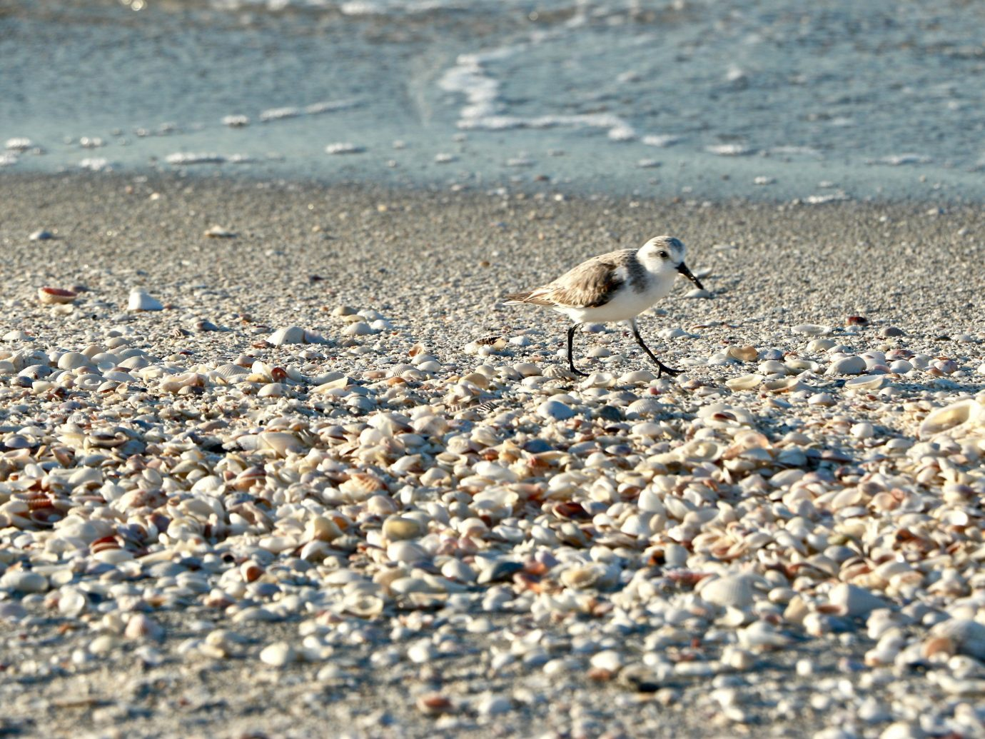 Secret Getaways Trip Ideas ground outdoor Bird animal Beach Nature standing aquatic bird sand Wildlife plover rocky Sea rock flock macro photography material shorebird shore sandy