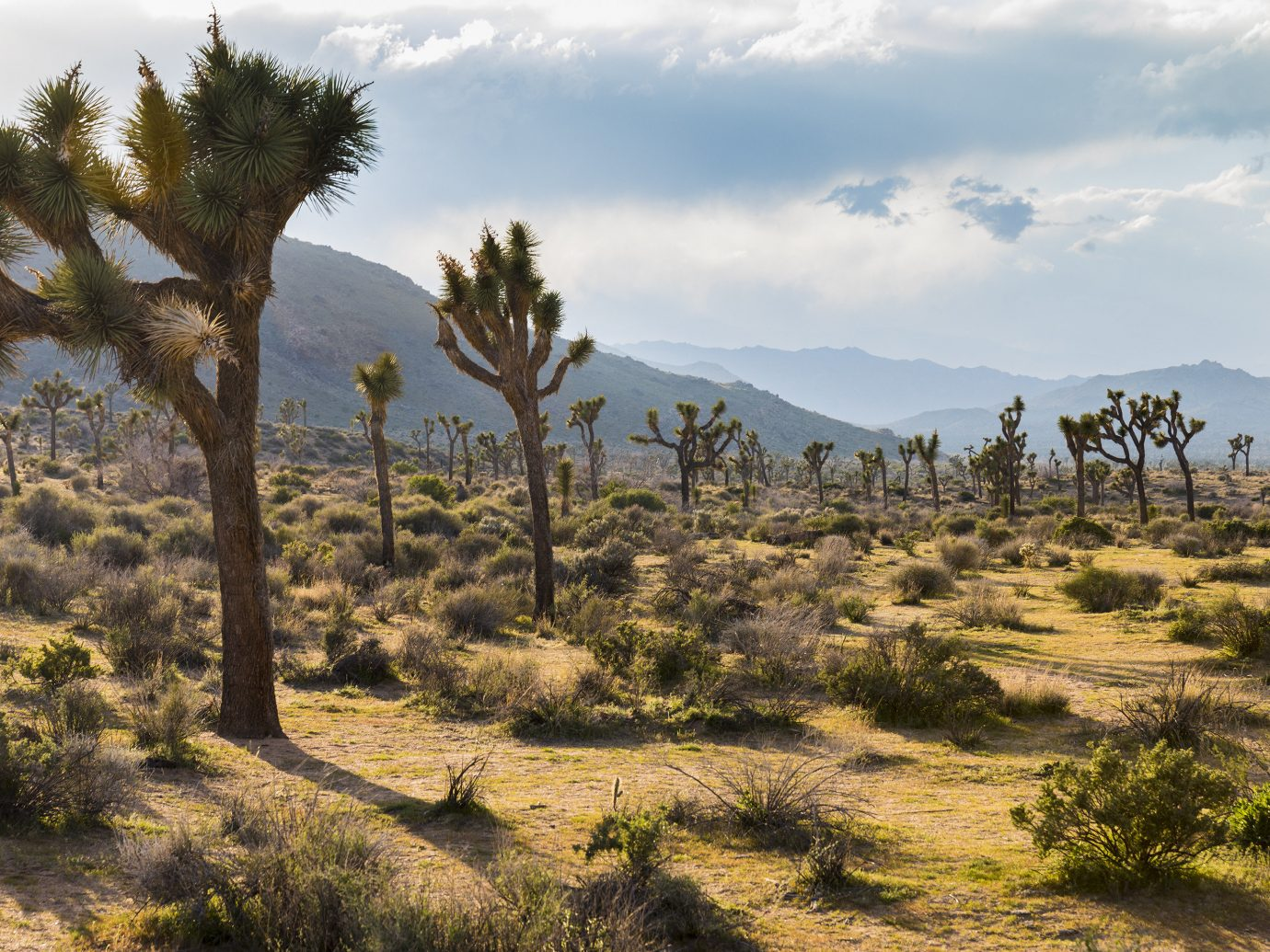 City Influencers + Tastemakers Joshua Tree ecosystem vegetation tree shrubland sky wilderness woody plant arecales palm tree plant plant community landscape savanna ecoregion grassland hill biome mountain grass national park cloud steppe