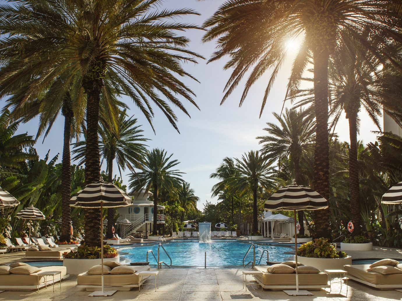 Hotels tree outdoor palm Resort chair swimming pool vacation lined palm family arecales plant estate area furniture several shade