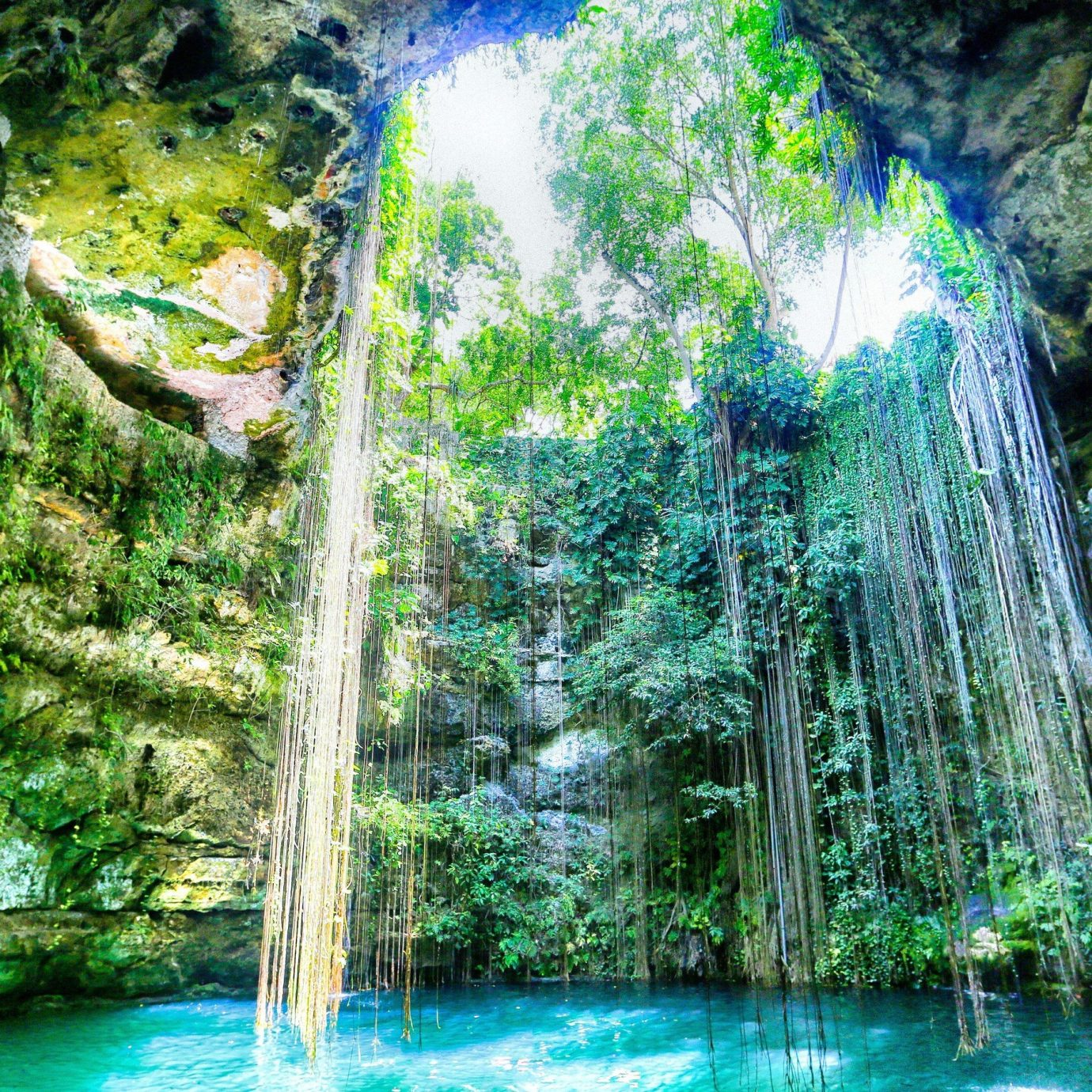 Outdoors + Adventure tree water habitat Waterfall outdoor Nature body of water green natural environment River Forest botany rainforest water feature Jungle reflection woodland tropics surrounded