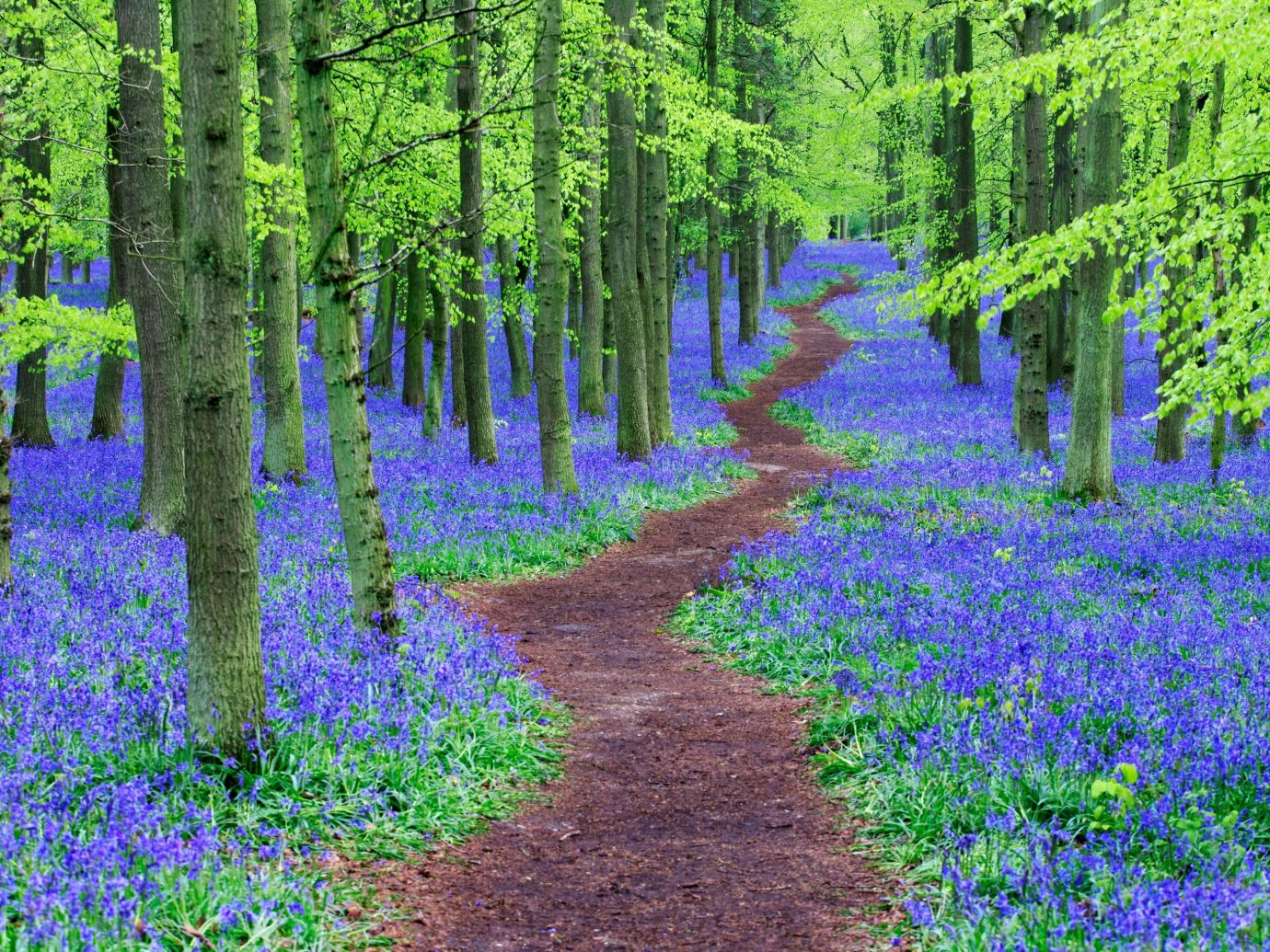 Trip Ideas tree outdoor grass habitat plant Forest woodland flower natural environment ecosystem land plant path biome woody plant wood meadow flowering plant lupin wildflower temperate coniferous forest wooded shrub area surrounded lush