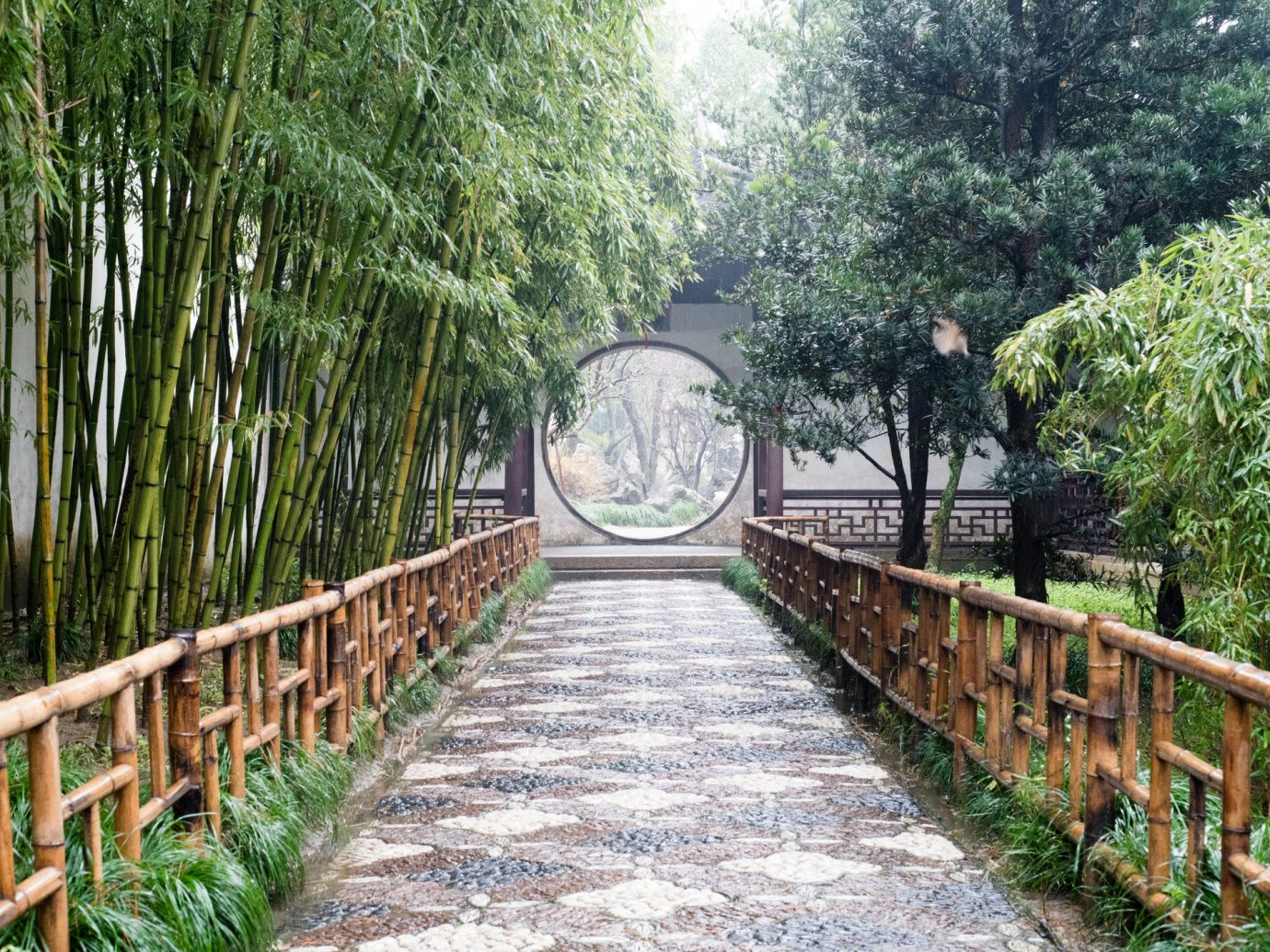 Offbeat tree Fence outdoor walkway bridge plant Forest Garden waterway woodland Jungle area lined surrounded