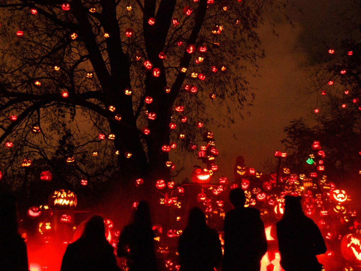 duplicate festive glow halloween holiday lights night night lights orange Outdoors pumpkins silhouette trees Trip Ideas outdoor christmas lights Christmas light christmas decoration darkness event bunch