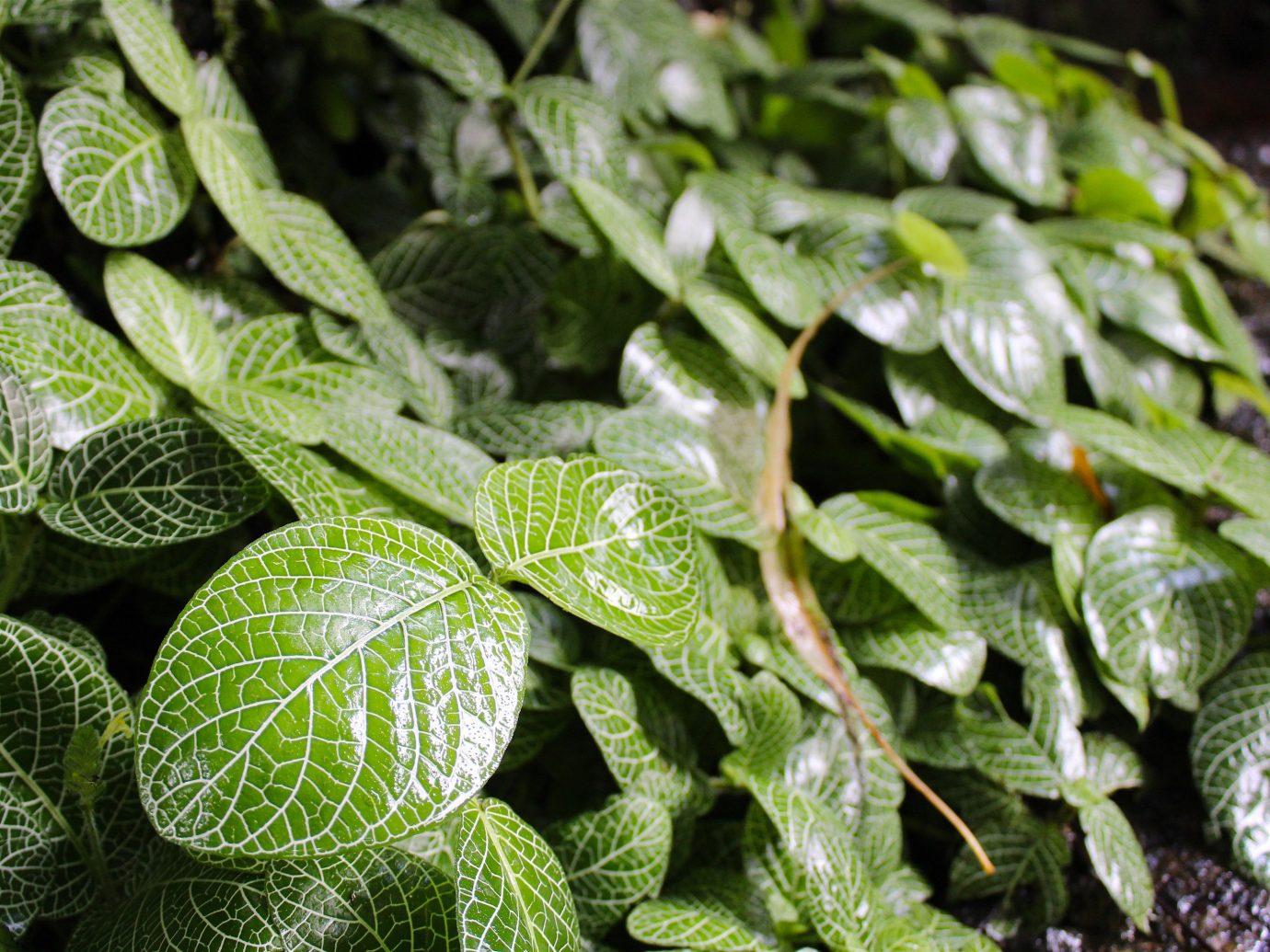 Trip Ideas green plant leaf flora botany flower land plant produce herb food flowering plant shrub close sliced fresh vegetable