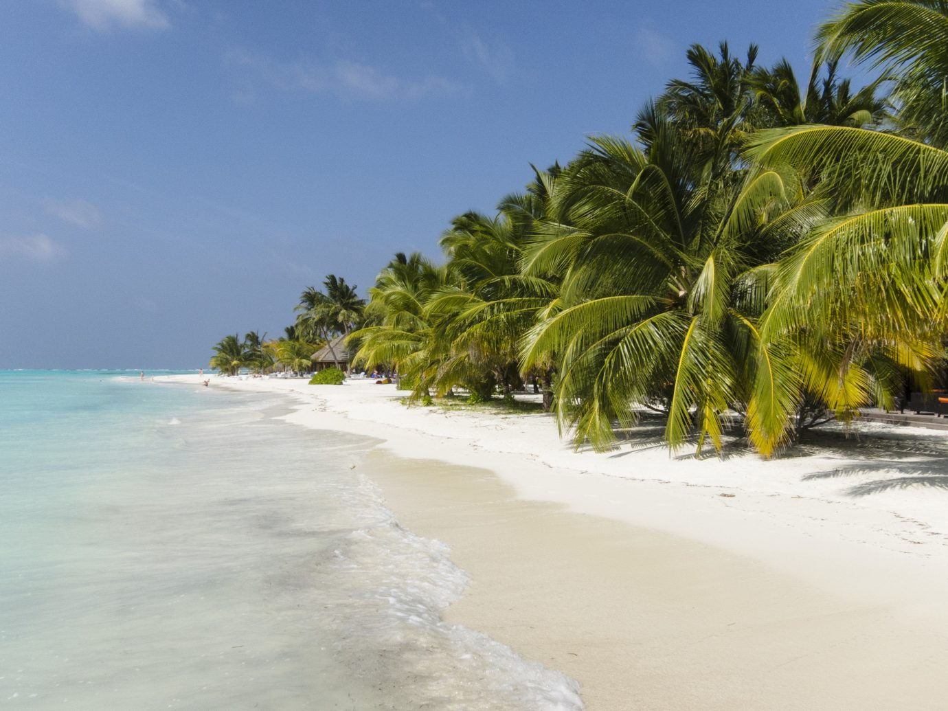 Islands Trip Ideas outdoor sky tree Beach Nature body of water shore Sea Coast Ocean caribbean vacation tropics arecales bay sand wave plant palm sandy