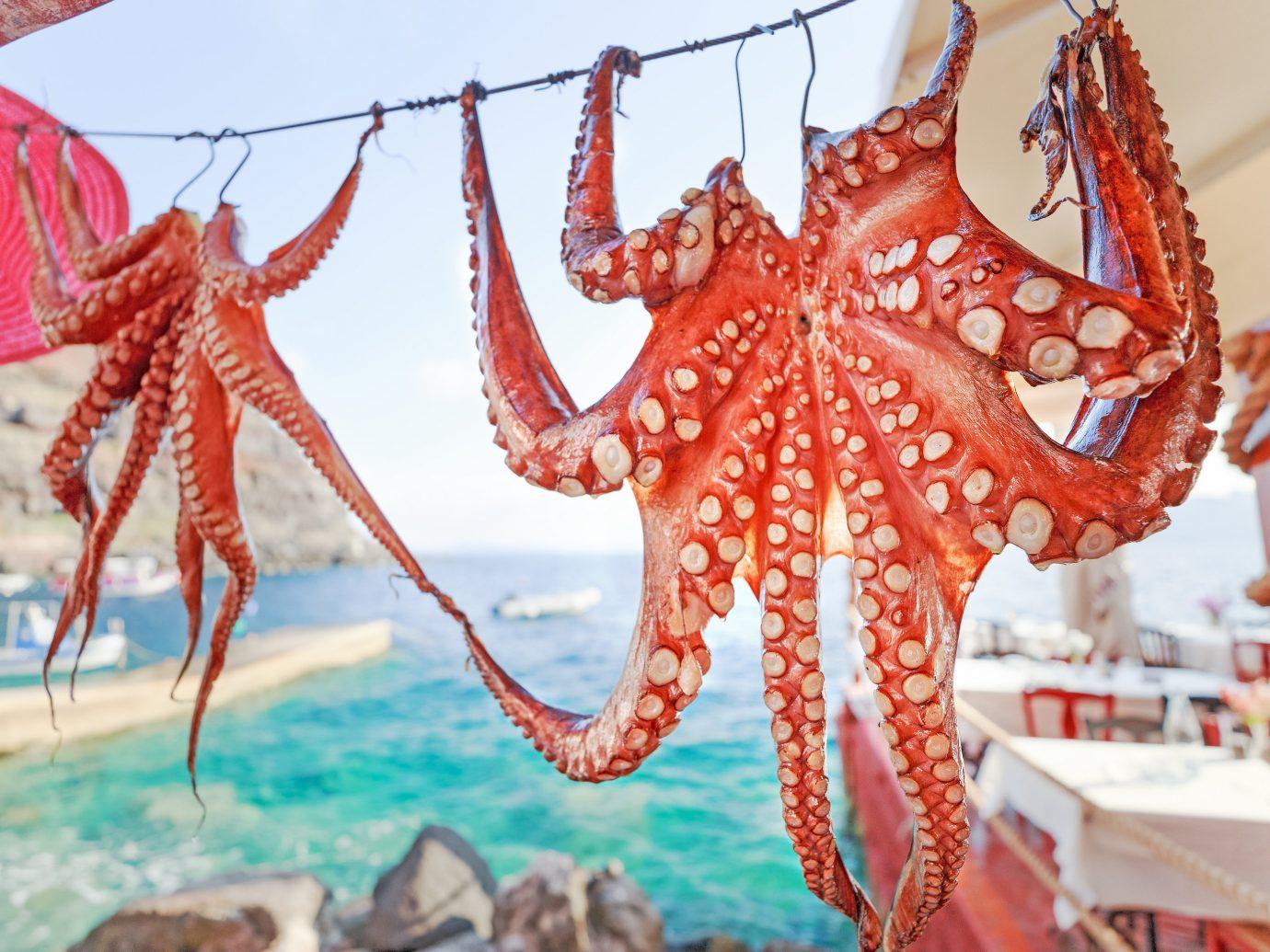 Trip Ideas octopus invertebrate cephalopod marine invertebrates