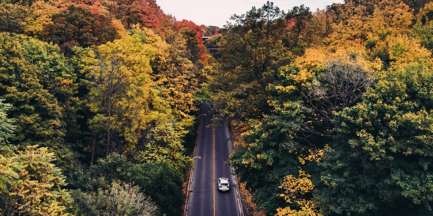 Hotels Packing Tips shopping Style + Design Travel Shop Trip Ideas tree outdoor sky Nature autumn wilderness season leaf plant Forest mountain morning woody plant landscape rural area woodland park sunlight flower trail wooded surrounded bushes lush