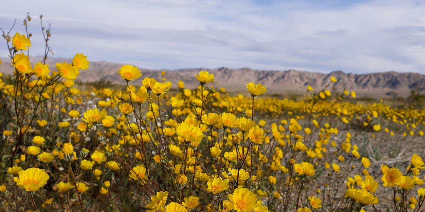 Trip Ideas flower sky yellow Nature field outdoor plant flora ecosystem grassland prairie plain sunflower land plant meadow wildflower daisy family flowering plant landscape plateau autumn brittlebush colored