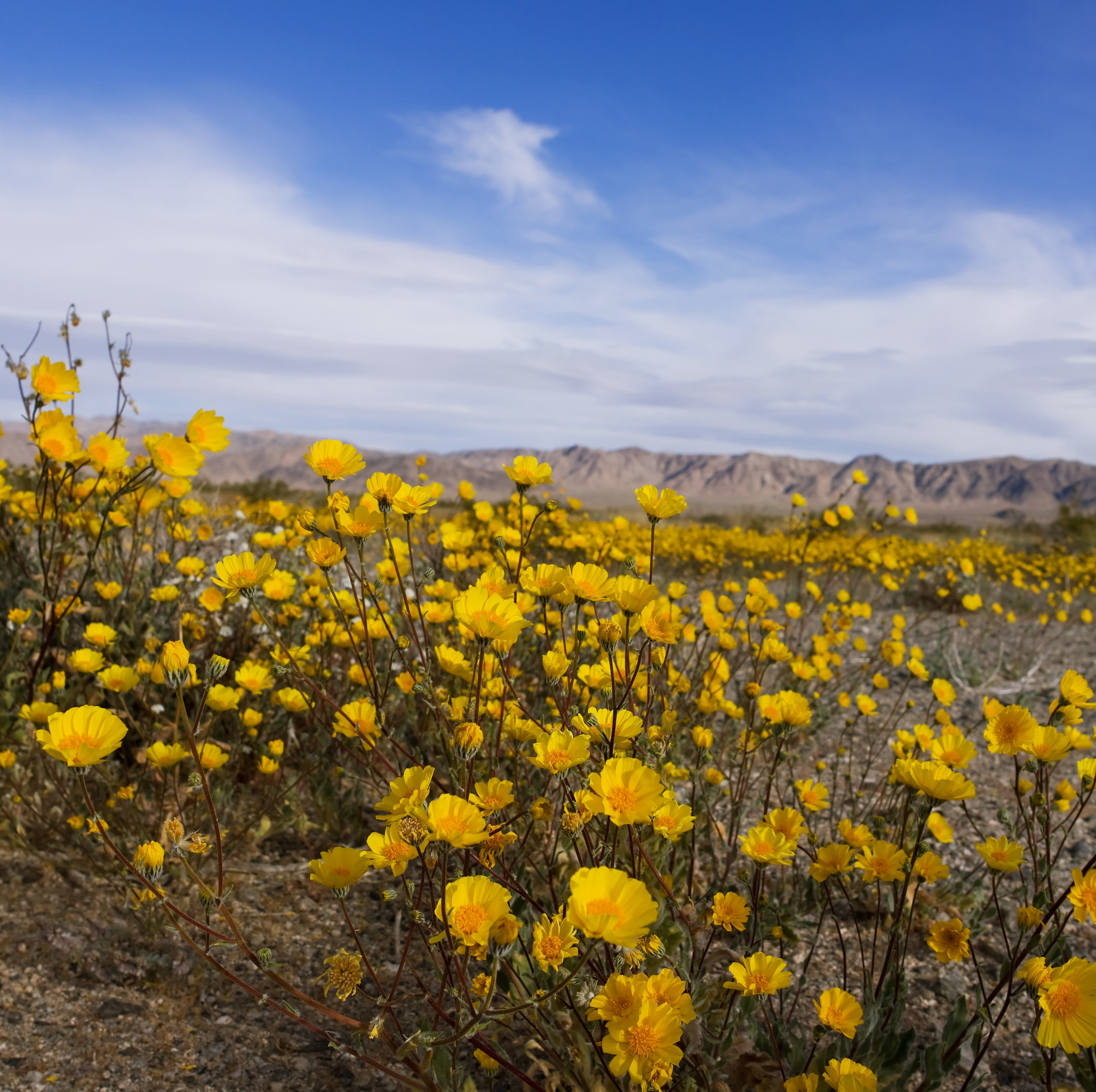 The 10 Best Places To See Wildflowers In The Us 2020 Jetsetter