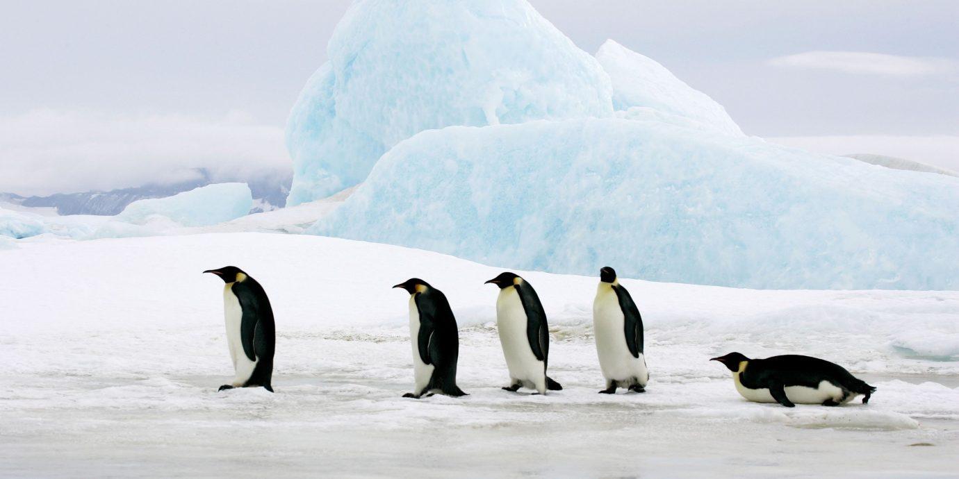 Trip Ideas sky flightless bird Bird penguin outdoor vertebrate mountain arctic ice arctic ocean black Nature